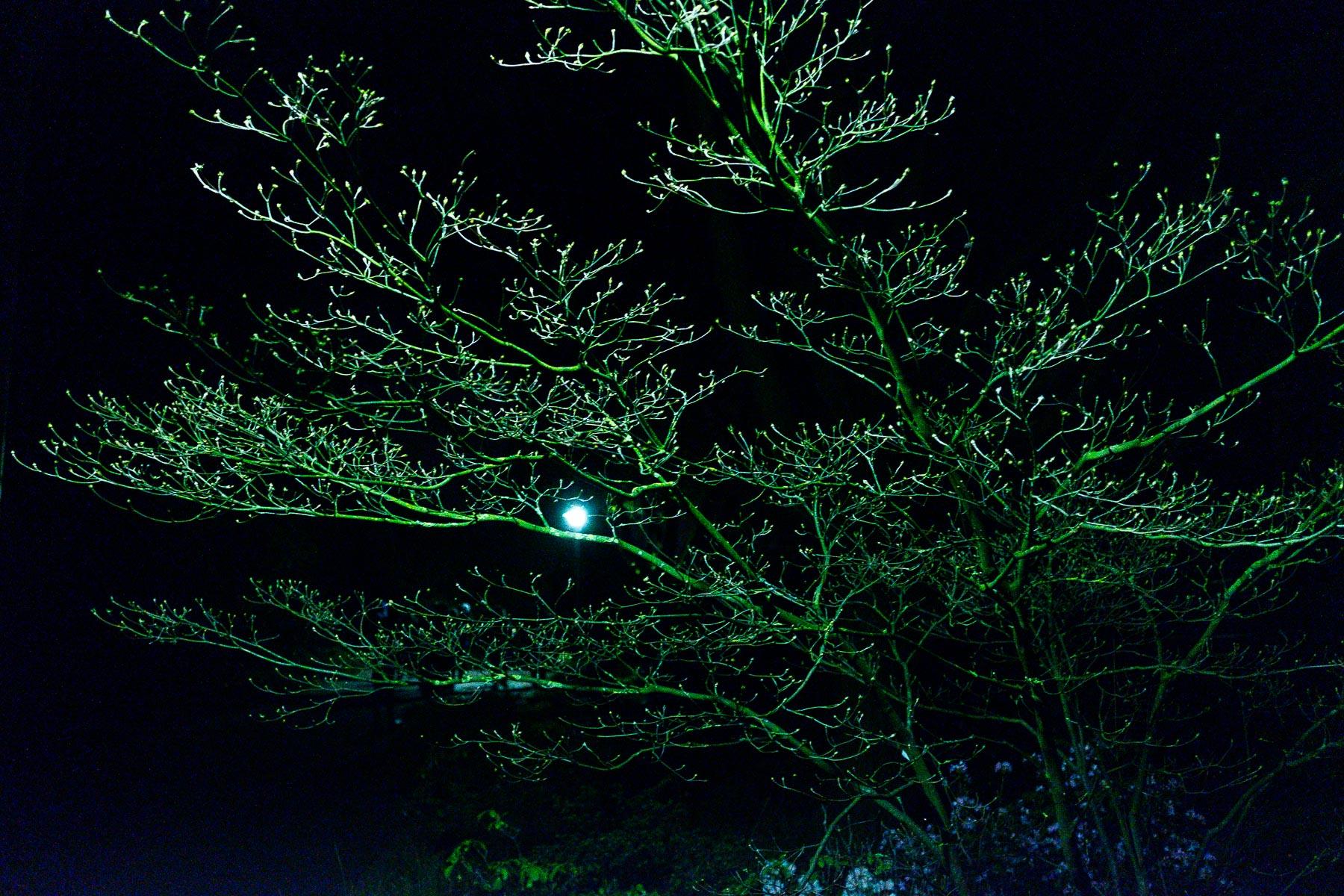 16.04.2016-Nachts im Botanischen Garten Düsseldorf